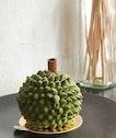 XO Durian