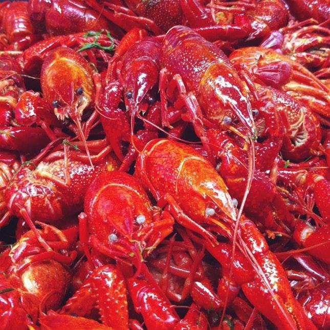 Baby Crayfish