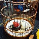 Molten lava cake in a cage #dolcetokyosg #dolcetokyo #moltenlavacake #cakeinacage #burpplesg #burpple