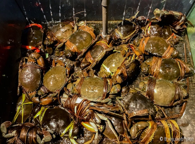 Live Crabs - To Be Hibernated