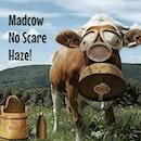 🐄 Madcow NO Scare Haze!