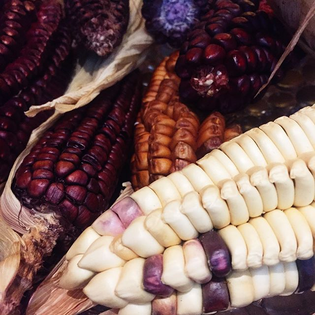 Meet Choclo, Peruvian corn or Cuzco corn.