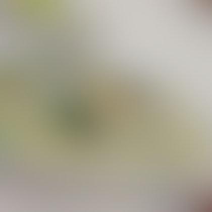 White Beehoon ($10++ For Medium)